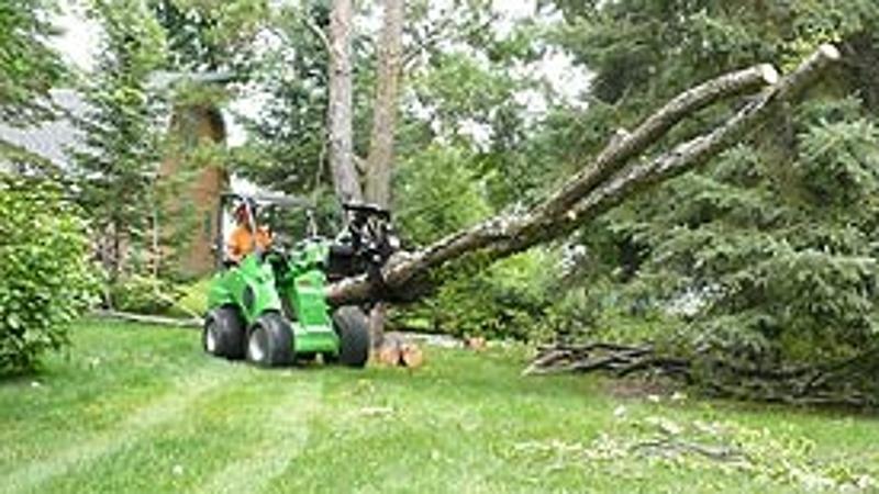 Avant - Tree Removal