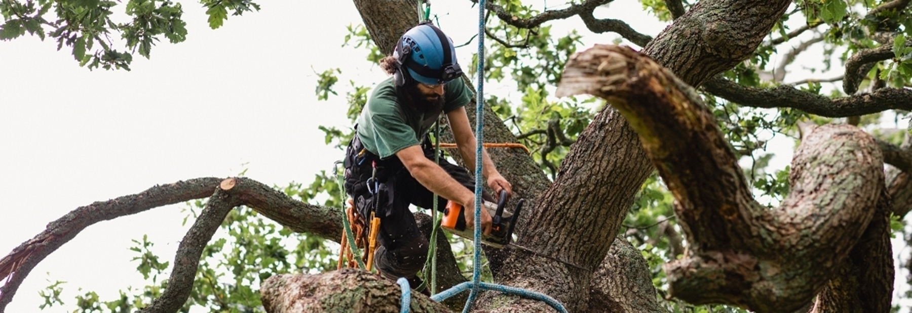 Arborist chainsawing tree limb